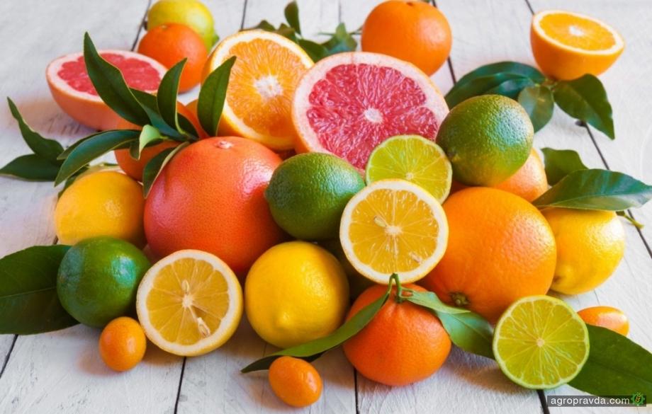 Хто постачає в Україну екзотичні фрукти